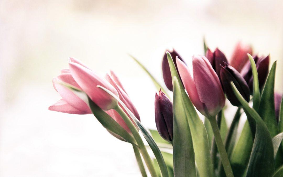 Durch die Blume gesagt …